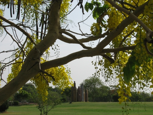 Amaltas In The Central Park-Jaipur