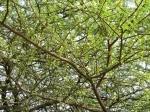 Simriti Ban, Jawaharlal Nehru Marg, Jaipur,canopy