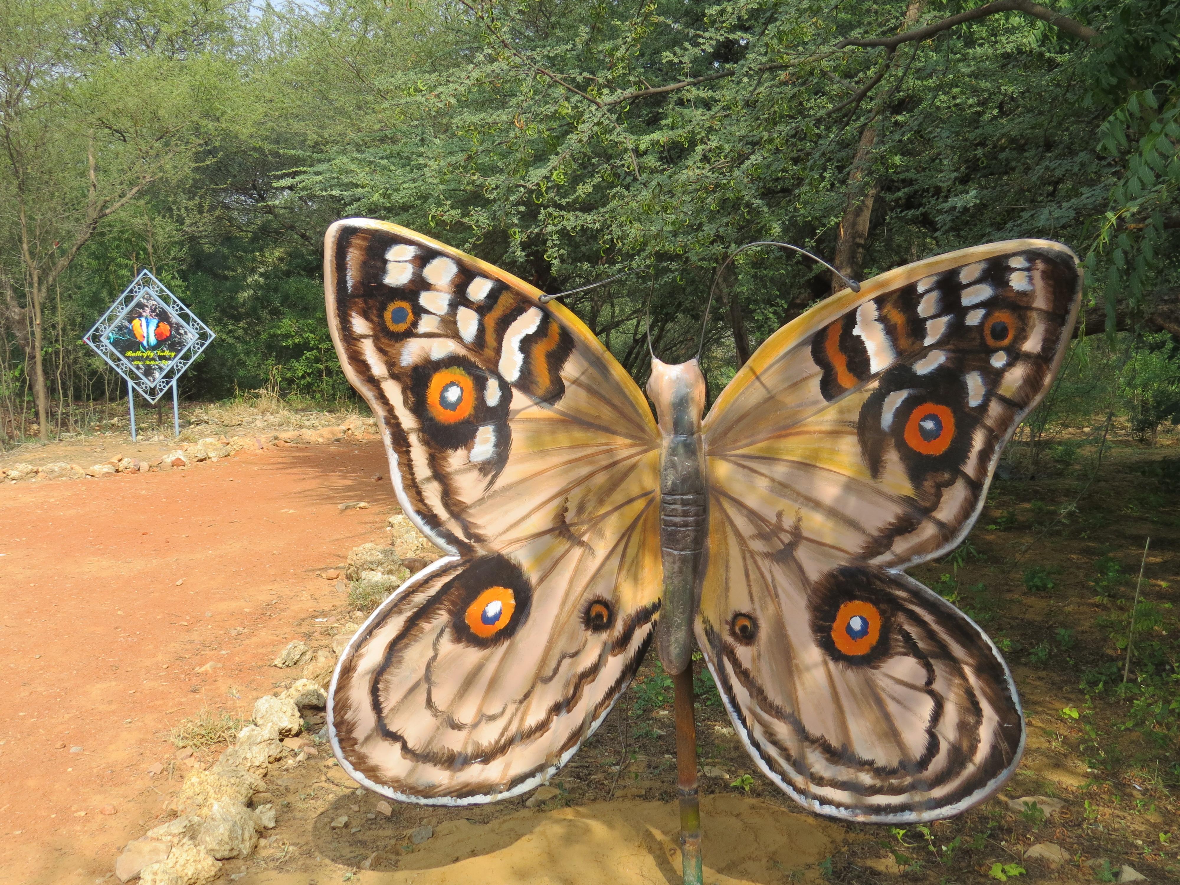 Butterfly valley in Simriti Ban,JLN Marg,Jaipur